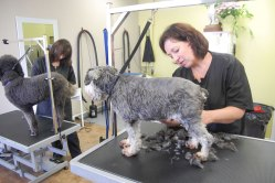 Ottawa pet groomers, Uptown Pet Grooming
